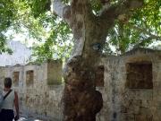 Rhodos Stadt - nicht nur wegen dieses besonderen Anblicks eine Reise wert