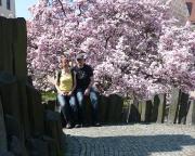 Earthcache Stolpener Basalt, hier mit der Pracht der Frühlingsblüte auf dem Marktplatz der Burgstadt