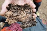 42 - Borkenkäfer-Wahnsinn, unser Wald stirbt ...
