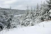 12 - Winterwald im Isergebirge in der Nähe von Bedrichov