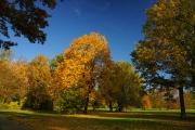 Herbstliche Impressionen aud dem Branitzer Park